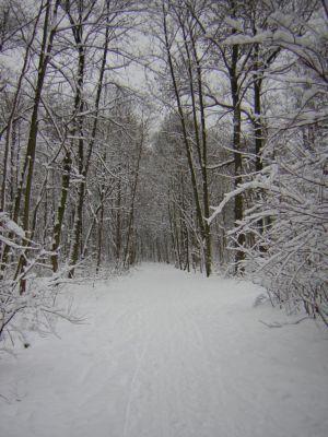 Winter 2008-2009_8 (2)